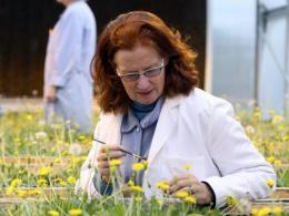 Katrina Cornish, Professor in the Department of Food, Agricultural and Biological Engineering